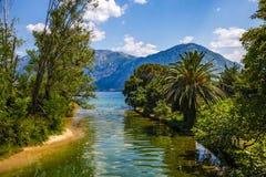 Visión escénica - palmeras y mar del río Foto de archivo libre de regalías