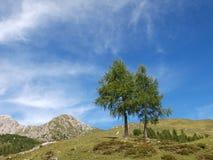 Visión hasta el pico de montañas Fotos de archivo libres de regalías