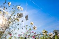 Visión hasta las flores de Sunny Sky y del jardín Foto de archivo