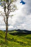 Visión hermosa en montaña Imágenes de archivo libres de regalías