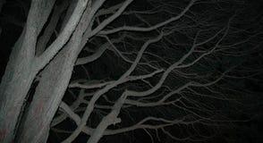 Visión mística Foto de archivo libre de regalías
