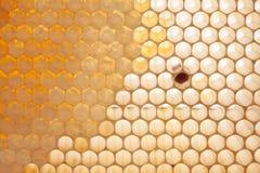 Visión macra natural, células orgánicas del panal Fotografía de archivo libre de regalías