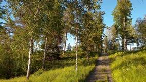 Visión magnífica sobre paisaje de la naturaleza el día de verano Paisaje del bosque con los árboles, los arbustos, las plantas y  almacen de metraje de vídeo