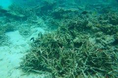 Visión mundial subacuática asombrosa Agua azul, arena blanca y arrecifes de coral muertos del Océano Índico snorkeling Fotos de archivo libres de regalías
