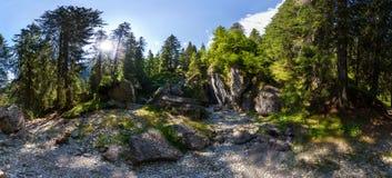 Visión panorámica dentro de un bosque del soporte Bucegi el verano Imagen de archivo