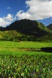 Visión panorámica en Hawaii Imágenes de archivo libres de regalías