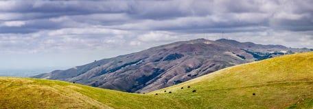 Visión panorámica hacia pico de la misión en un día de primavera nublado; una manada del pasto visible del ganado en la ladera; S imágenes de archivo libres de regalías