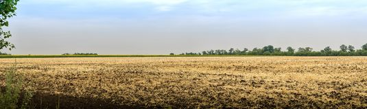 Visión panorámica Paja en campo de trigo segado Campo de trigo cosechado Imagen de archivo libre de regalías
