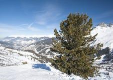 Visión panorámica sobre una cuesta nevosa con el árbol de pino Imagenes de archivo