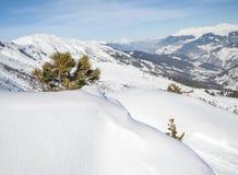 Visión panorámica sobre una cuesta nevosa con el árbol de pino joven Imagen de archivo libre de regalías