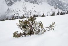 Visión panorámica sobre una cuesta nevosa con el árbol de pino joven Imagen de archivo