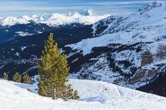Visión panorámica sobre una cuesta nevosa con el árbol de pino joven Fotografía de archivo libre de regalías
