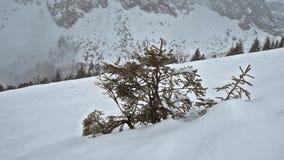 Visión panorámica sobre una cuesta nevosa con el árbol de pino joven almacen de metraje de vídeo