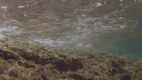 Visión particular del fondo del mar mediterráneo de la isla de Ventotene almacen de video