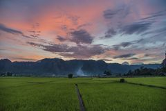 Visión que sorprende sobre los campos del arroz con un cielo de la puesta del sol imagen de archivo libre de regalías