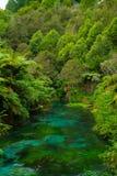 Visión rio abajo en el medio de arbusto nativo fotos de archivo libres de regalías