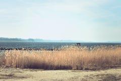 Visión sobre el agua y la playa natural contra el cielo frío azul fotografía de archivo libre de regalías