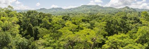 Visión sobre el bosque alrededor del ¡n de Copà Imagen de archivo libre de regalías