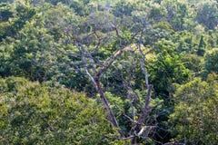 Visión sobre los árboles en el campo Fotos de archivo libres de regalías
