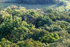 Visión sobre los árboles en el campo Foto de archivo libre de regalías