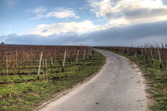 Visión sobre los viñedos en Hochheim, Alemania foto de archivo libre de regalías