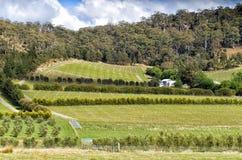Visión sobre viñedo grande y la plantación verde oliva Imagenes de archivo