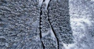 Visión superior aérea de arriba sobre el camino de la vuelta de la curva de la horquilla en bosque nevado del árbol de pino del f almacen de metraje de vídeo