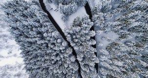 Visión superior aérea de arriba sobre el camino de la vuelta de la curva de la horquilla en bosque nevado del árbol de pino del f almacen de video