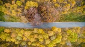 Visión superior aérea de arriba sobre el camino recto en el forestFall colorido anaranjado, árbol verde, amarillo, rojo del otoño Fotografía de archivo libre de regalías