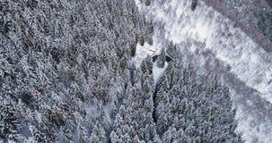 Visión superior aérea delantera sobre el camino de la vuelta de la curva de la horquilla en bosque nevado del árbol de pino del f metrajes