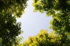 Visión superior con la rama de árbol y el cielo azul Fotos de archivo