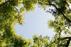 Visión superior con la rama de árbol y el cielo azul Fotografía de archivo libre de regalías