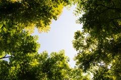 Visión superior con la rama de árbol y el cielo azul Imagen de archivo