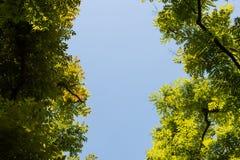 Visión superior con la rama de árbol y el cielo azul Fotografía de archivo