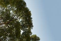 Visión superior con la rama de árbol y el cielo azul Foto de archivo libre de regalías