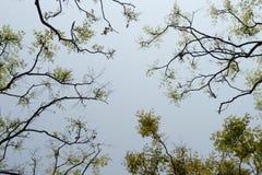 Visión superior con la rama de árbol y el cielo azul Imágenes de archivo libres de regalías