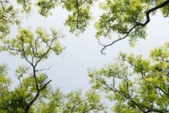 Visión superior con la rama de árbol y el cielo azul Foto de archivo