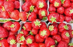 Visión superior para los paquetes de fresas jugosas Fotografía de archivo