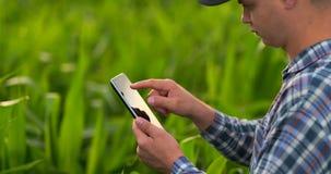 Visión trasera: un granjero moderno con una tableta en sus manos que tocan las hojas del maíz en el campo almacen de metraje de vídeo