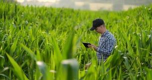 Visión trasera: un granjero moderno con una tableta en sus manos que tocan las hojas del maíz en el campo metrajes