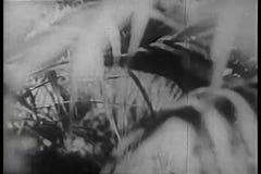 Visión a través de arbustos metrajes