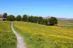 Visión a través de campos amarillos al viaducto de Ribblehead Imagen de archivo libre de regalías