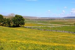 Visión a través de campos amarillos al viaducto de Ribblehead Fotos de archivo libres de regalías