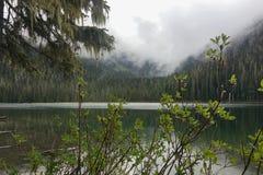 Visión a través de los arbustos del bosque de la niebla de la mañana sobre el lago limpio de la montaña imagen de archivo