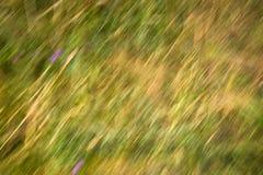 Visión a través del paisaje inglés del campo durante víspera del verano tardío Imagenes de archivo