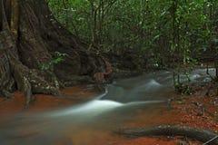 Visión tropical Imagen de archivo