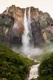 Visión vertical de debajo el bosque del Salto Ángel lleno de agua, en Venezuela en parque del canaima, dando un sentido del descu foto de archivo libre de regalías