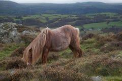 Visiónes desde la montaña de Conwy fotografía de archivo