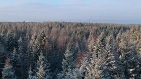 Visi?n de levantamiento sobre bosque nevoso del invierno almacen de video
