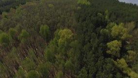 Visi?n superior desde el dron del bosque verde y del lago azul Naturaleza asombrosa almacen de metraje de vídeo